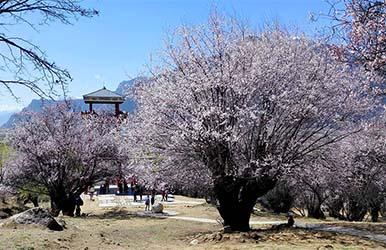 西藏林芝·嘎拉桃花村景观设计